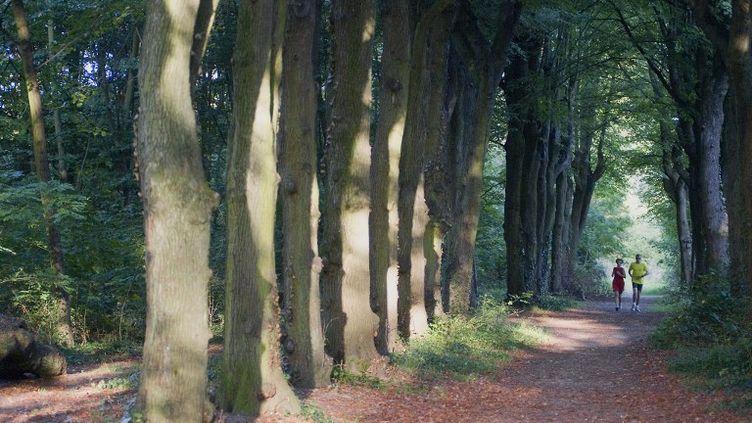 Un tronc humain sans tête a été découvert le 15 juin 2012 dans le bois de Vincennes. (DANIEL THIERRY / PHOTONONSTOP / AFP)