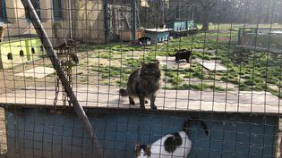 Des chats dans un refuge de la SPA dans le Vaucluse.  (ISABELLE GAUDIN / FRANCE-BLEU VAUCLUSE)
