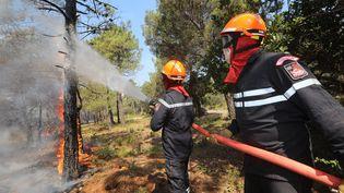 Les pompiers luttent contre les flammes, le 26 juillet 2017, à Bormes-les-Mimosas (Var). (MAXPPP)