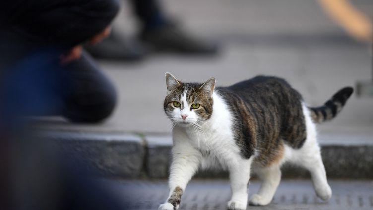 Larry, le chat du 10 Downing Street, à Londres, le 26 avril 2020. (DANIEL LEAL-OLIVAS / AFP)
