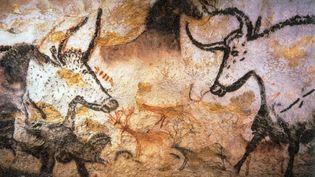 Grotte de Lascaux. (D.R.)