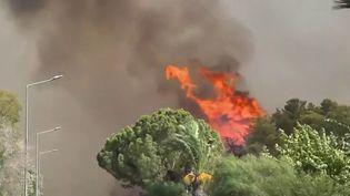 Méditerranée : de violents feux de forêt frappent la Turquie et la Grèce (France 2)