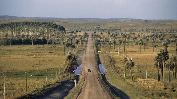 Une voiture sur une route uruguayenne. (Illustration). (MARC VRIN / PHOTONONSTOP)