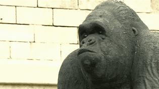 Gorille de l'artiste italien Stefano Bombardieri exposé dans le cadre de la Biennale de Menton  (France 3 / Culturebox)