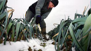 Un producteur de poireaux face à la vague de froid de janvier 2010 en Lot-et-Garonne. (MAXPPP)