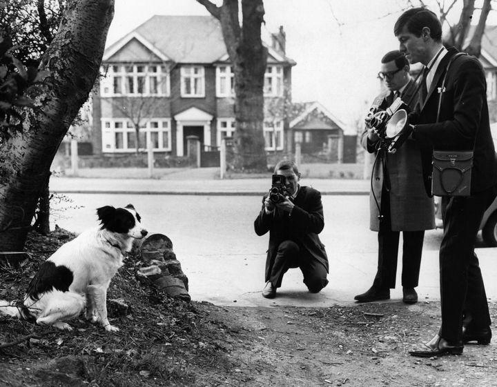 Pickles, le chien qui a retrouvé le trophée Jules Rimet, le 28 mars 1966, à Londres (Royaume-Uni), posant pour des photographes. (CENTRAL PRESS / HULTON ARCHIVE / GETTY IMAGES)