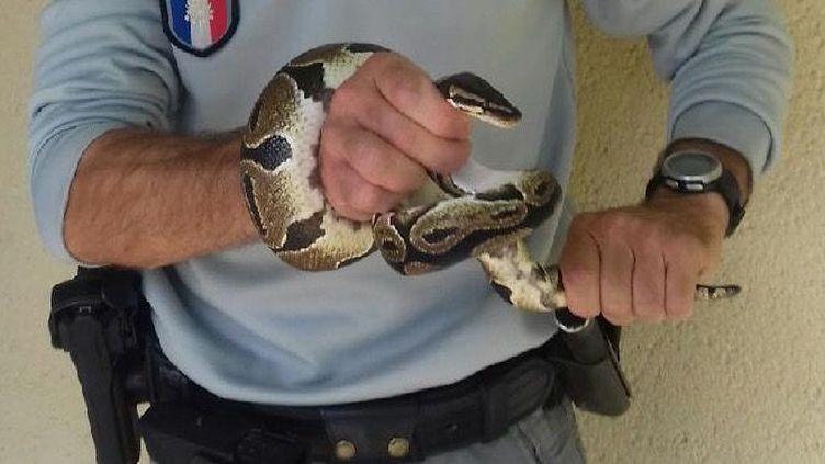 Le python dans les mains du garde de l'ONCFS qui l'a capturé. (Préfecture de la Dordogne-ONCFS)
