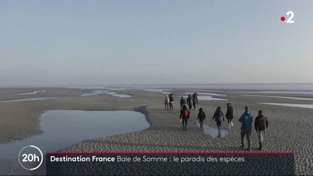 Découverte : les espèces protégées de la baie de Somme