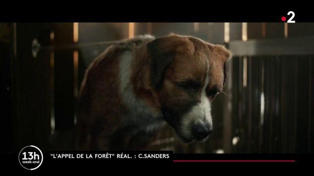 """Cinéma : nouvelle adaptation de """"l'Appel de la forêt"""", le roman de Jack London"""