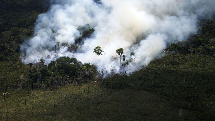 Un feu de forêt en Amazonie, au Brésil, le 14 octobre 2014. (RAPHAEL ALVES / AFP)