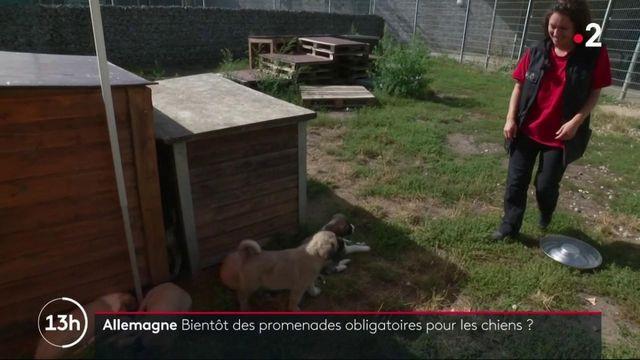 Allemagne : promener son chien pourrait devenir obligatoire