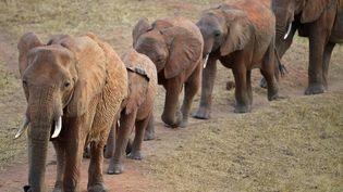 Un troupeau d'éléphants dans le parc national de Tsavo(Tanzanie). (AFP)