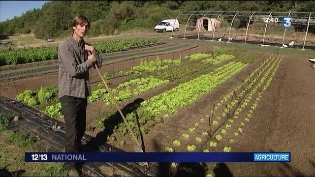 La pratique du bio intensif dans l'Hérault