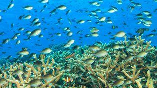 Les eaux tropicales se réchauffent et l'avenir des poissons des eaux froides est compromis. (STUART WESTMORLAND / AFP)