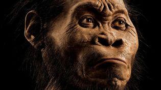 Cette photo de mars2015 fournie par le magazine National Geographic (et venant de son numéro d'octobre 2015) et rendue publique le 10 septembre 2015 montre une reconstruction de la figure de l'Homo Naledi par le paleoartiste JohnHGurche à son studio de Trumansburg, aux Etats-Unis. (MARK THIESSEN / NATIONAL GEOGRAPHIC / AFP)