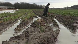 Des champs de légumes dévastés par les inondations. (CAPTURE ECRAN FRANCE 2)