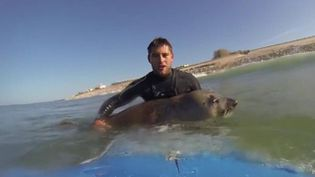 """Le phoque """"You"""" sur une planche de surf à Lacanau. (BERTRAND CHAUSSADE / YOUTUBE)"""