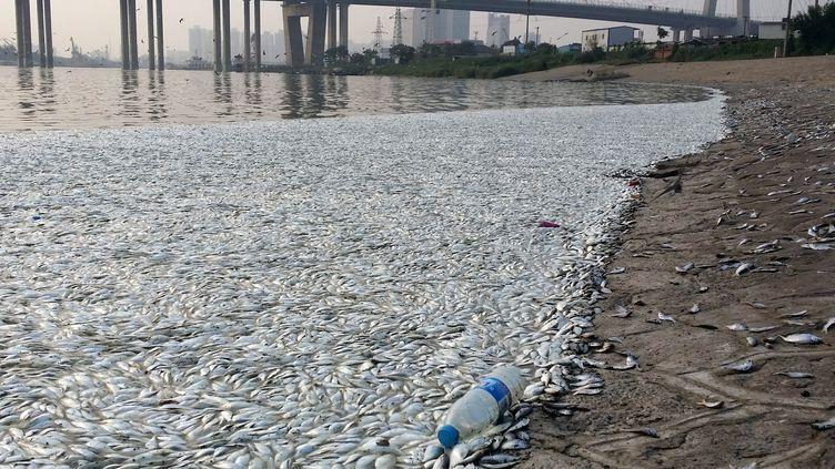 Des milliers de poissons morts se sont échoués sur les berges d'une rivière de Tianjin, le 20 août 2015. (IMAGINECHINA / AFP)