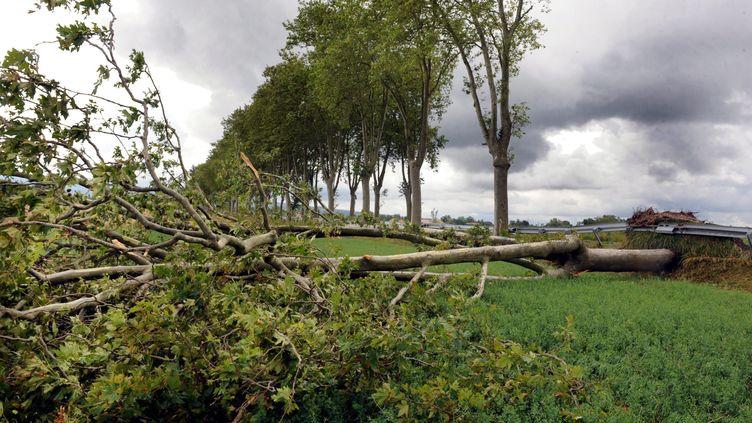 Dégâts après une tempêteprès de Revel (Haute-Garonne), le 7 juillet 2014. (MAXPPP)