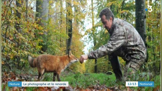 Nature : la relation complice entre un photographe et une renarde