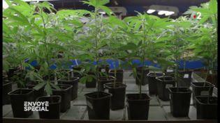 """Cannabis thérapeutique : """"Il est temps d'y avoir accès, et qu'on puisse enfin soigner les gens avec"""", témoigne la maman d'une fillette épileptique (ENVOYÉ SPÉCIAL  / FRANCE 2)"""