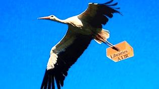 La cigogne remplace les drones  (France3/culturebox/capture d'écran)