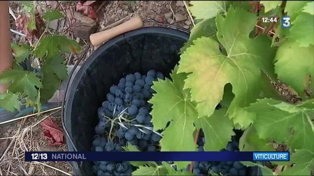Hérault : l'appellation Vins de France commence à trouver son public