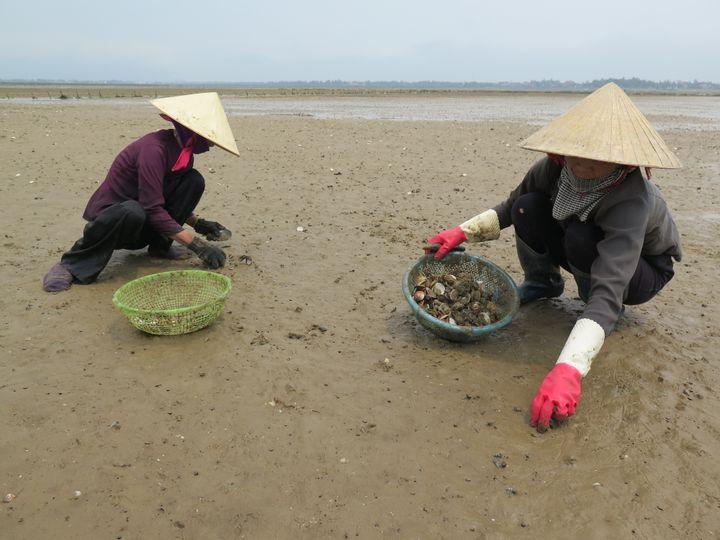 Des femmes ramassent des palourdes dans la province de Ha Tinh, au Vietnam, le 27 avril 2016. (STR / AFP)