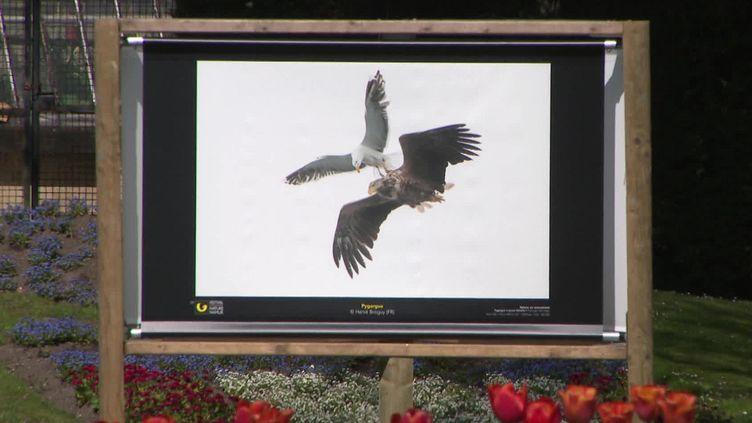 Le festival de L'Oiseau et de la nature expose 60 photos animalières primées. (FRANCEINFO)