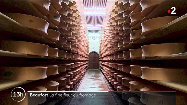 Beaufort : comment fabriquer la fine-fleur du fromage ?