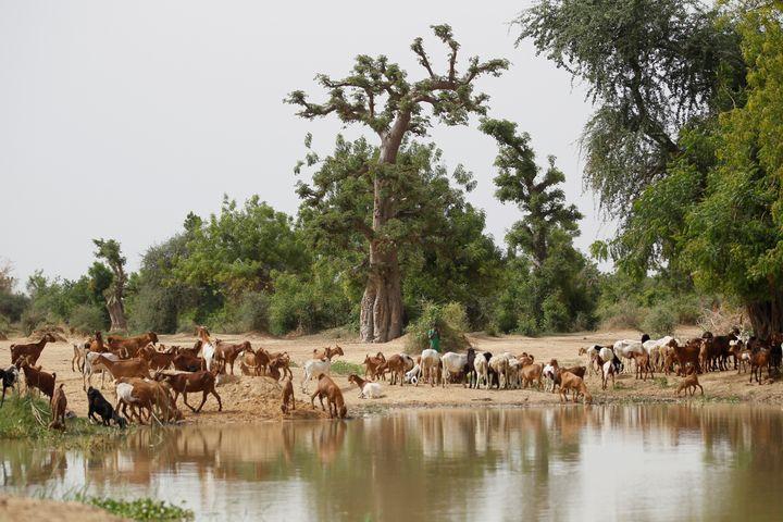 Sur les bords de la rivièreHadejia dans levillage de Wachakal, dans le nord du Nigeria, le 6 juillet 2017.. (REUTERS - AKINTUNDE AKINLEYE / X02000)