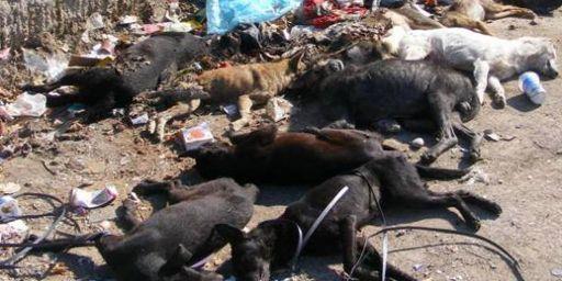 Dans certaines fourrières, les chiens sont tués dès leur arrivée. (DR)