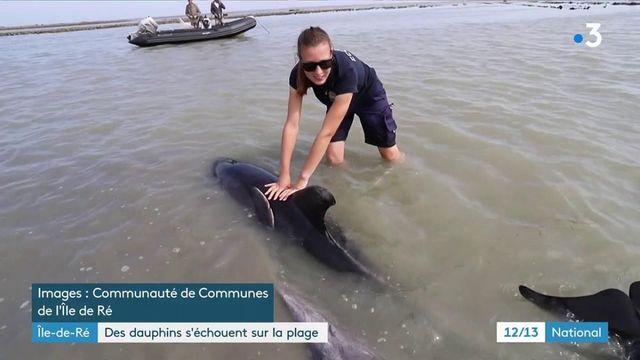 Île-de-Ré : un échouage massif de plusieurs dauphins évité in extremis