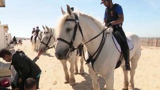 La police municipale de Calais (Pas-de-Calais) donne une seconde vie à des chevaux de trait maltraités, qui deviennent les montures des agents. (FRANCE 3)
