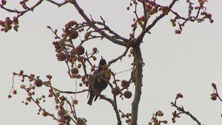 Les oiseaux font la fête au printemps. Dans le Tarn, une guide naturaliste propose à des groupes d'identifier le chant des oiseaux. (France 3)