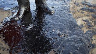 Sur une plage du comté de Santa Barbara (Californie, Etats-Unis) souillée par une fuite de pétrole, le 19 mai 2015. (DAVID MCNEW / GETTY IMAGES NORTH AMERICA / AFP)