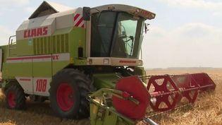 Agriculture : le calendrier des récoltes perturbé par les récentes intempéries (FRANCE 3)