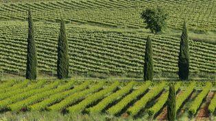 Une enquête lancée par Santé publique France et l'Agence du médicament cherche à comprendre comment l'utilisation des produits phytosanitaires dans les vignobles affecte celles et ceux qui habitent tout près de là. (THIERRY LE QUAY / BIOSPHOTO)
