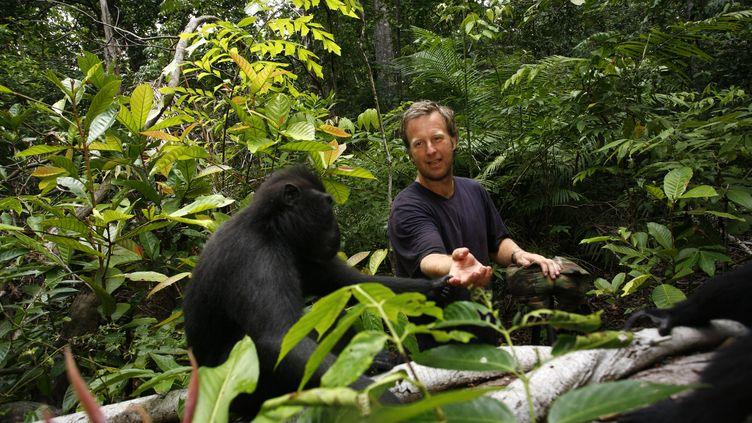 Depuis 2011, les clichés des macaques à crête, une espèce menacée, ont fait le tour du monde. (DAVID SLATER / MAXPPP)