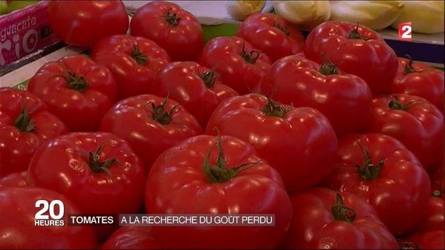 Consommation : les tomates sous serre