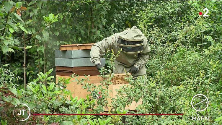 Les ruches en cours d'instalation à l'Elysée. (France 2)