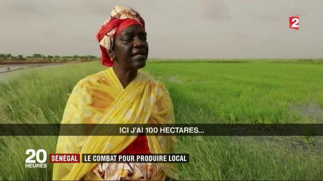 Sénégal : le combat du gouvernement pour produire local