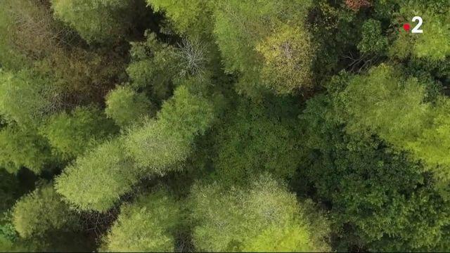 Bambou : le trésor vert d'Asie