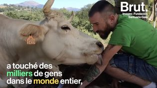 VIDEO. En Espagne, le geste de remerciement de cette vache envers son soigneur suscite l'émotion (BRUT)