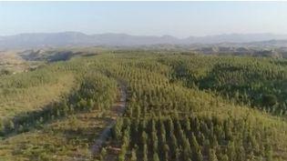 Le Pakistan est un des pays asiatiques qui comptent le moins de forêts. 1 milliard d'arbres vont être plantés pour y remédier. (FRANCE 2)