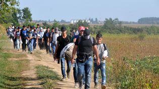 Des réfugiés marchent vers le village de Tovarnik, en Croatie, près de la frontière avec la Serbie, le 16 septembre 2015. (MEDIN HALILOVIC / AFP)