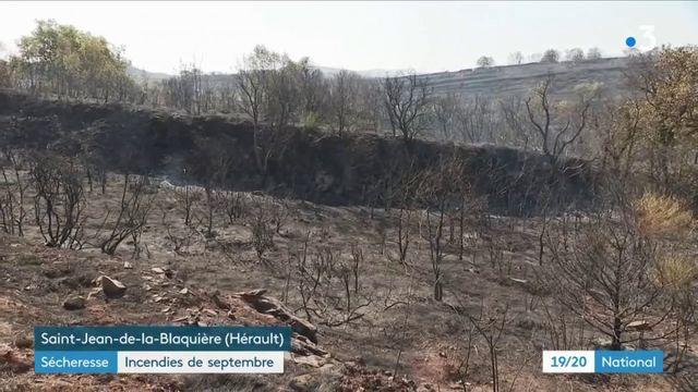 Sécheresse : de nombreux incendies dans le sud de la France