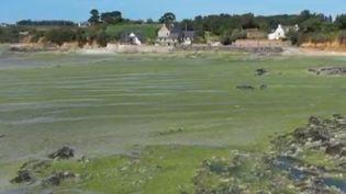 En France, la pollution aux algues vertes sur les côtes du territoire français est désormais dans l'agenda de l'exécutif depuis plusieurs mois. En juillet 2020, la mauvaise gestion de l'État avait été pointée du doigt par la Cour des comptes. (FRANCE 2)