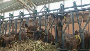Coronavirus : les agriculteurs touchés par la fermeture des marchés (FRANCE 2)