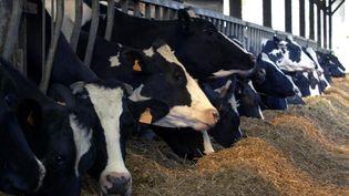 Des vaches prise en photo à Argouges (Manche), le 7 mai 2001, avant leur abattage suivant le principe de précaution. (MYCHELE DANIAU / AFP)